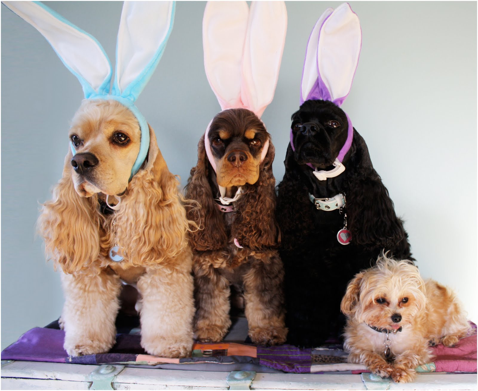 HappyEaster-dogs